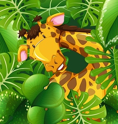 Cute giraffe in green bush vector