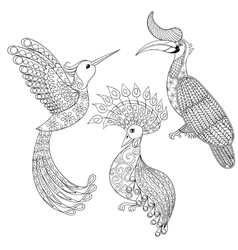 Coloring page with bird rhinoceros hummingbird vector