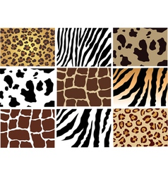 animal skin vector image vector image