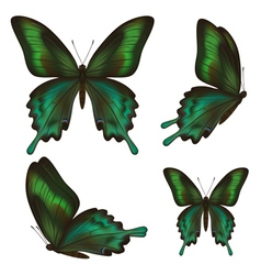 Set of realistic green butterfly vector image vector image