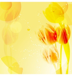 yellow tulip background vector image vector image
