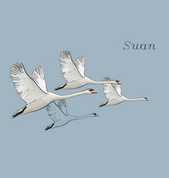 drawing flying swans hand drawn vector image
