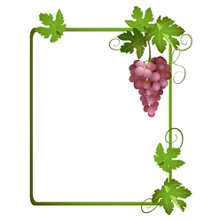Green frame with a bunch of grapes vector