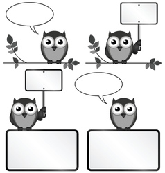 Owls with copy space vector