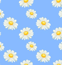 Camomile seamless pattern vector