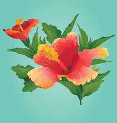 Sunset Hibiscus - vector image