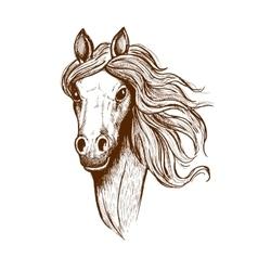 Beautiful young welsh cob horse sketch vector