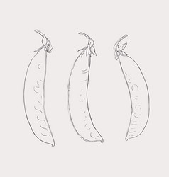 Hand drawn sketch peas sketch set organic food vector
