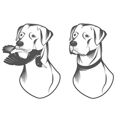 Hunting retriever head vector image
