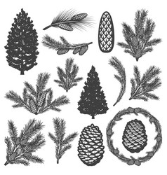 vintage coniferous tree elements set vector image vector image