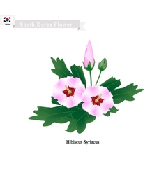 National flower of south korea hibiscus syriacus vector