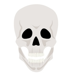 Skull isolated on white vector