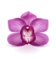 Flower purple orchid vector
