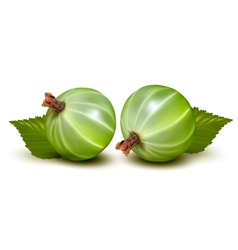 Green gooseberries vector image vector image