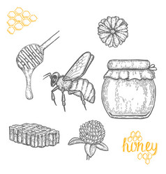 hand drawn honey set over white background vector image vector image