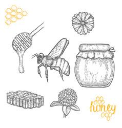 hand drawn honey set over white background vector image