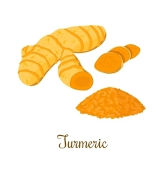 Turmeric root with powder isolated vector