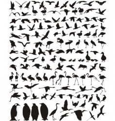 waterfowl vector image