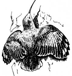 bird tichodroma vector image vector image