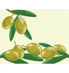 Olive branch with leaves vector image