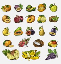 set of hand drawn engraved fresh fruits vector image vector image