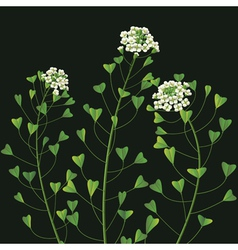 Weed flower vector image vector image