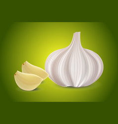 Fresh whole garlic two cloves slices and garlic vector
