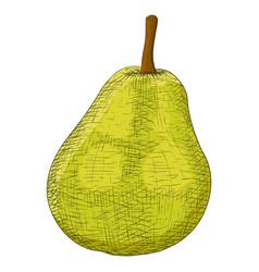 green pear sketch vector image vector image