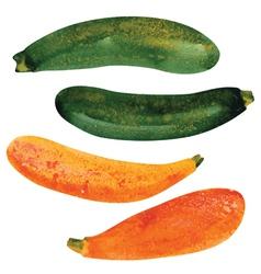 Zucchini vector