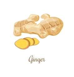 Fresh ginger and slices vector