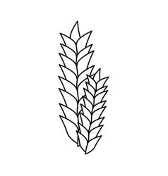 wheat ears icon vector image vector image