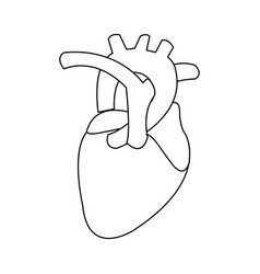 Healthy heart organ human cardiology vector