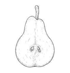half of pear hand drawn sketch vector image