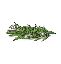 Isolated clipart eucalyptus vector