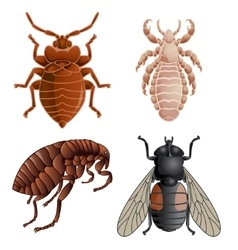 Set of icons with pests vector