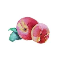 Peach hand drawn watercolor vector
