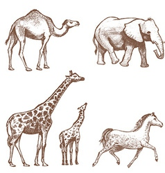 collection of picture pencil with animals vector image