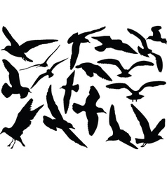 Seagull collection - vector