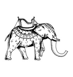 Indian elephant engraving vector