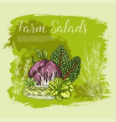 poster sketch fresh farm salad vegetables vector image vector image