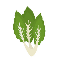 Salad leaves vegetable vector
