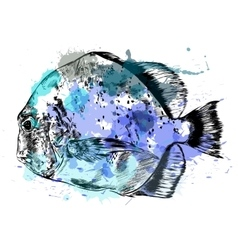 Watercolor sketch of hand drawn fish vector image vector image