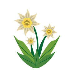 daffodil flower spring image vector image