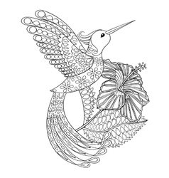 Coloring page with hummingbird in hibiskus vector