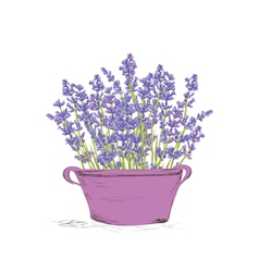 Seamless lavender pattern vector image vector image