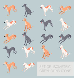 set of greyhound icons vector image vector image