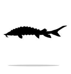 Sturgeon fish black silhouette aquatic animal vector
