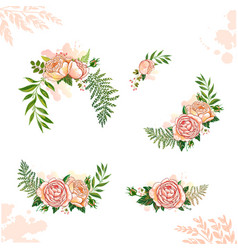 floral collection rose vector image