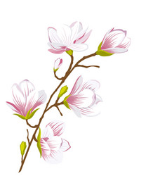 Cute magnolia branch blossom flowers vector