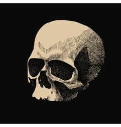 White skull on black background in grunge vector